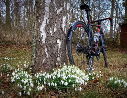 Cykelcrossen och snödropparna på Öland